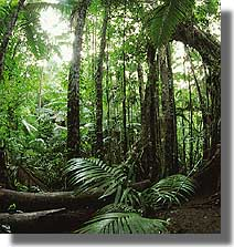 Northern Qld Rainforest